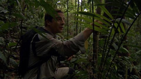 {S}06.{E}02: Im Dschungel Borneos
