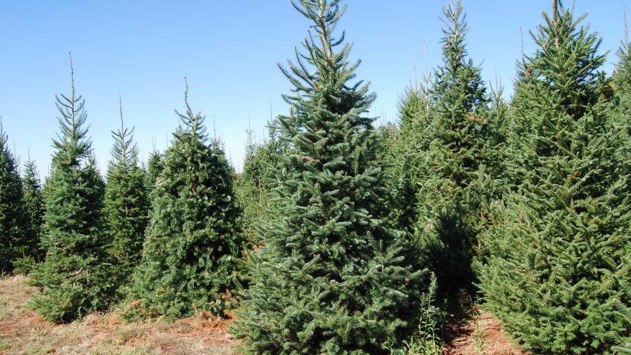 {S}13.{E}20: Armored Cars, Christmas Trees