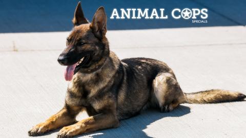 Animal Cops Specials 2009