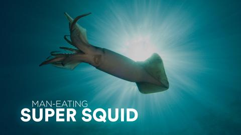 Man-Eating Super Squid