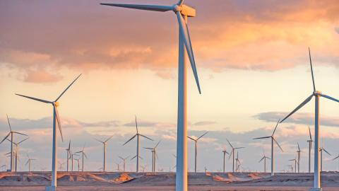{S}14.{E}13: Wind Turbines, Car Tyres, Mushrooms