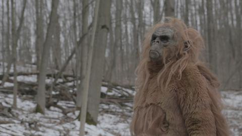 {E}03: Das Monster aus dem Wald