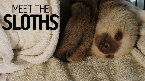 Meet The Sloths