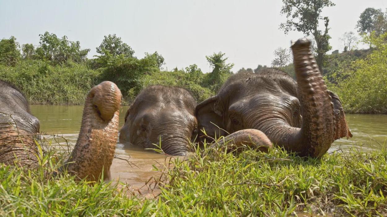 {S}01.{E}06: Thailand