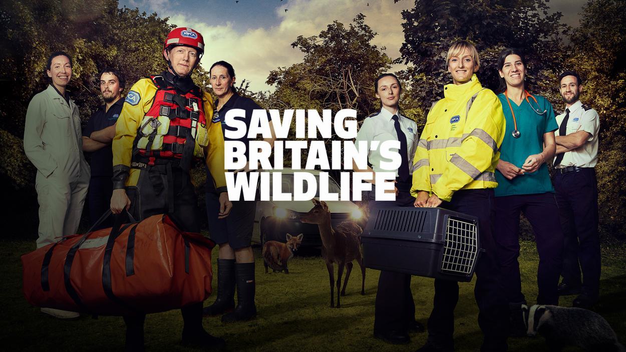 Saving Britain's Wildlife
