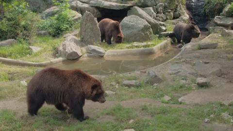 {S}02.{E}03. Das Bären-Paradies