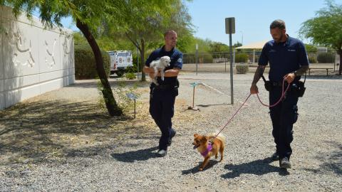 {S}20.{E}07: Canal Dog Rescue