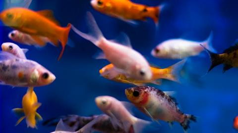{S}24.{E}05. Commercial Drones, Aquarium Fish, Runway Cleaners, Shuttlecocks