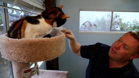 {S}08.{E}10: Katze vs. Kind