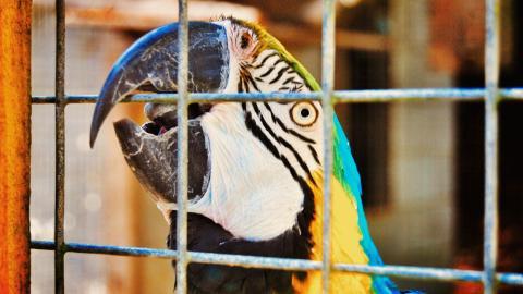 {S}03.{E}09: Parrot Rescue