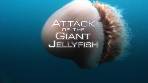Attack Of The Giant Jellyfish