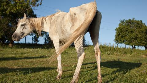 {S}03.{E}14: Horse Quarantine