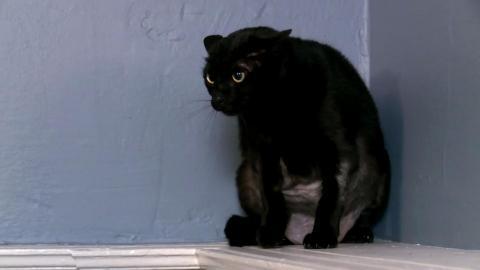 {S}08.{E}07. Die Aggro-Katze