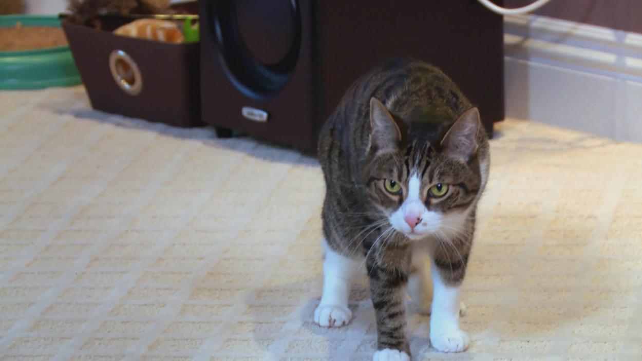 {S}08.{E}12: Katzen-Gangs im Clinch