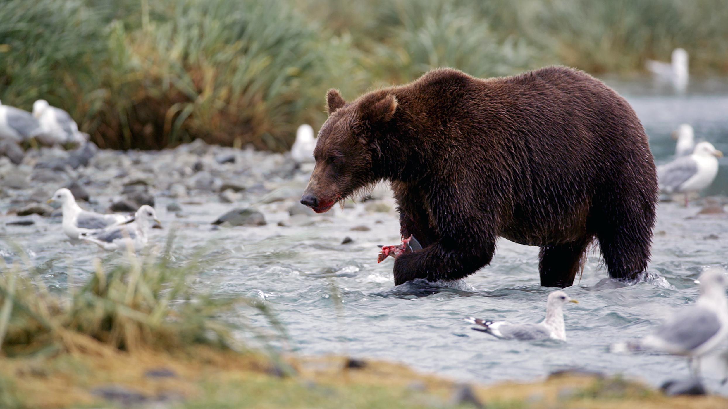 alder dating lover i Alaska beste bilder for dating sites