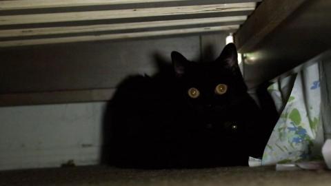 {S}08.{E}03: Nightmare on Cat Street