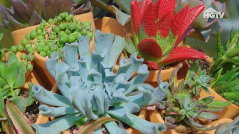 Blumentöpfe aus Ton