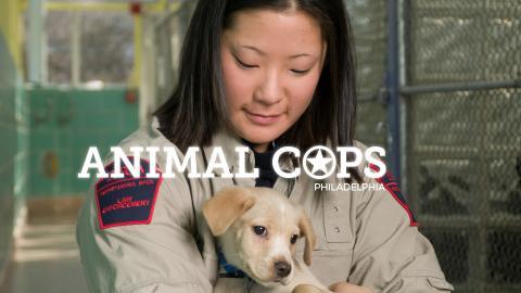 Animal Cops Philadelphia
