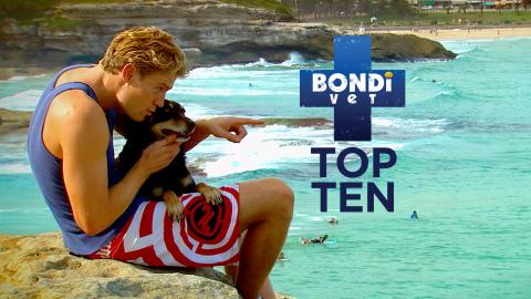 Bondi Vet Top Ten