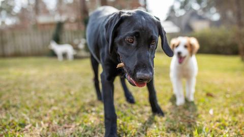 {E}06: Der Hunde-Held
