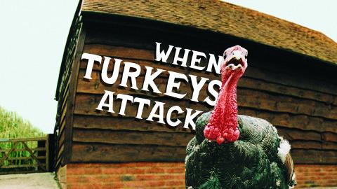 When Turkeys Attack