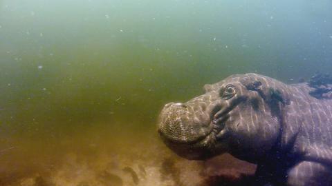 {E}02: Hippo
