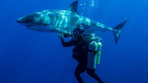 {E}03: Shark