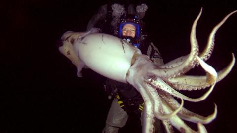 {E}04: Squid
