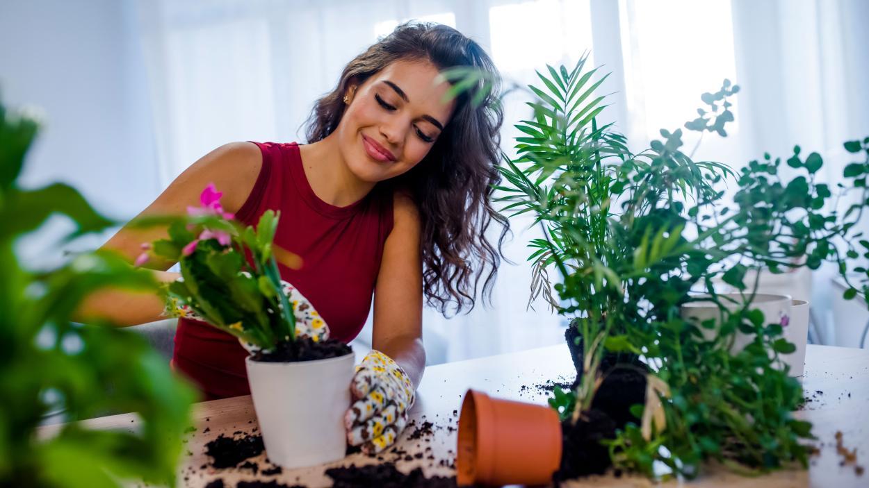 Urban Jungle: Schaff dir dein eigenes grünes Paradies
