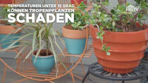 Pflanzen ohne Ungeziefer aus dem Garten reinholen