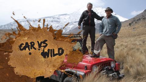 Car Vs Wild