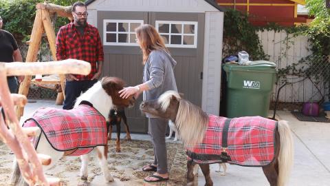{E}06: Die rollende Pony-Scheune