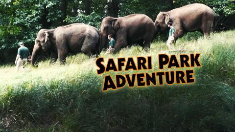 Safari Park Adventure