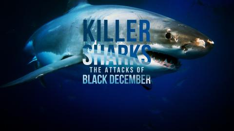 Killer Sharks: The Attacks Of Black December