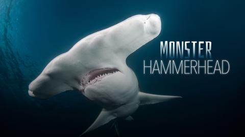 Monster Hammerhead