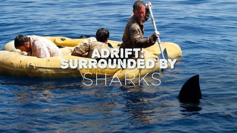 Adrift: 47 Days With Sharks
