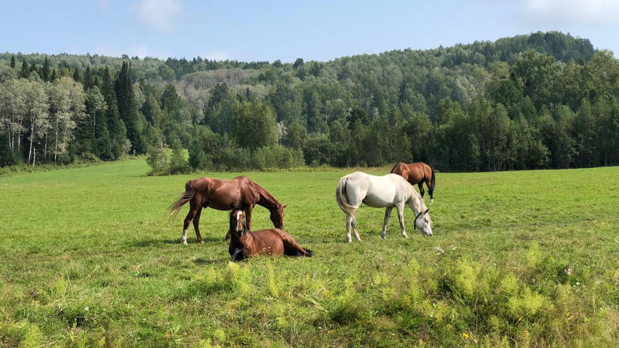 Ausgerechnet Sibirien - Ulf steigt aus: Sibirische Pferde