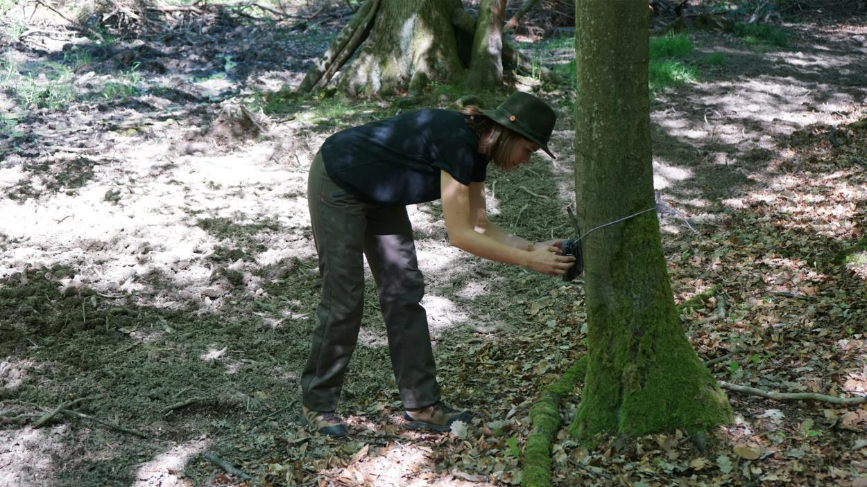 Jägerleben: Helena im Wald