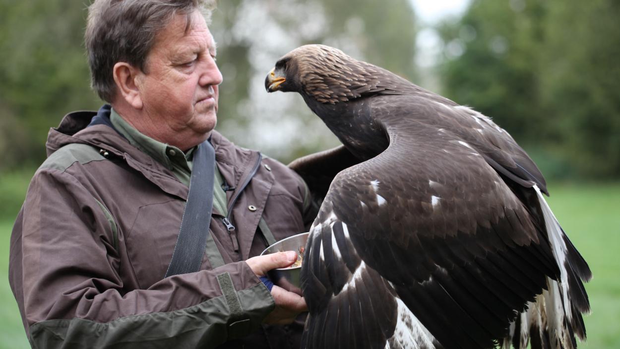 Jägerleben: Jagd mit Greifvögeln