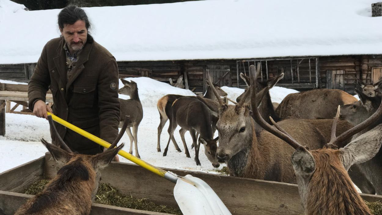 Jägerleben: Hirsche füttern